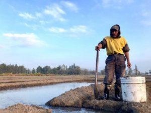 Tláhuac producirá más de 6 mil toneladas de rom ...